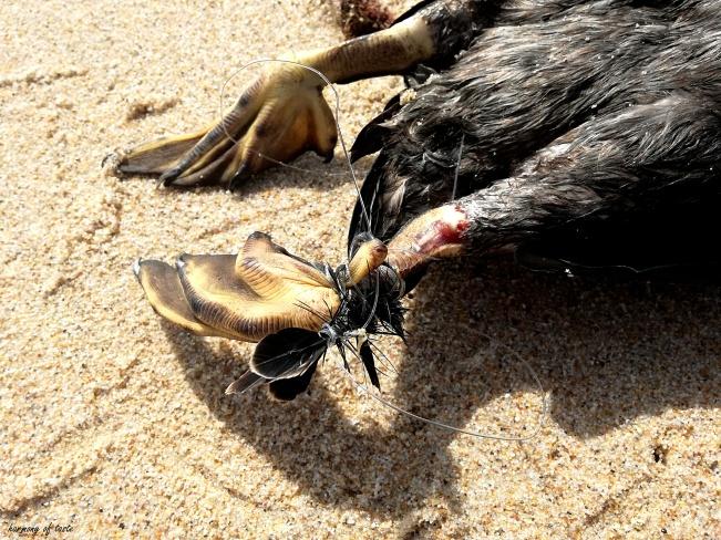 ptak zabitz przez sieci 1.jpg