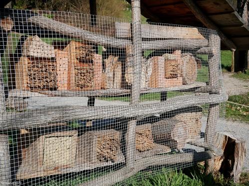 coś dla pszczół 2.JPG