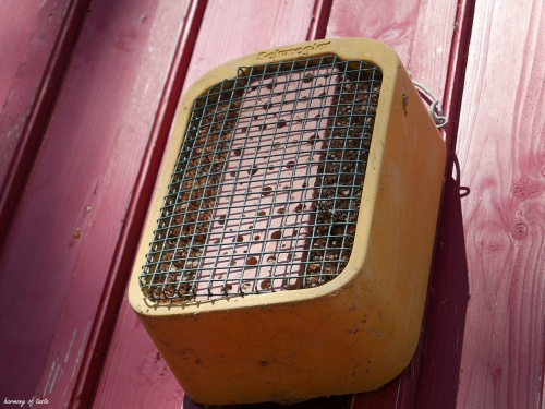 coś dla pszczół 8.JPG