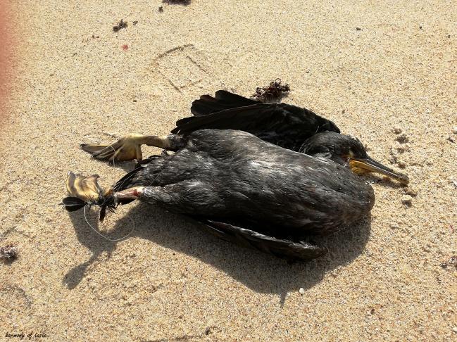 ptak zabity przez sieci.jpg