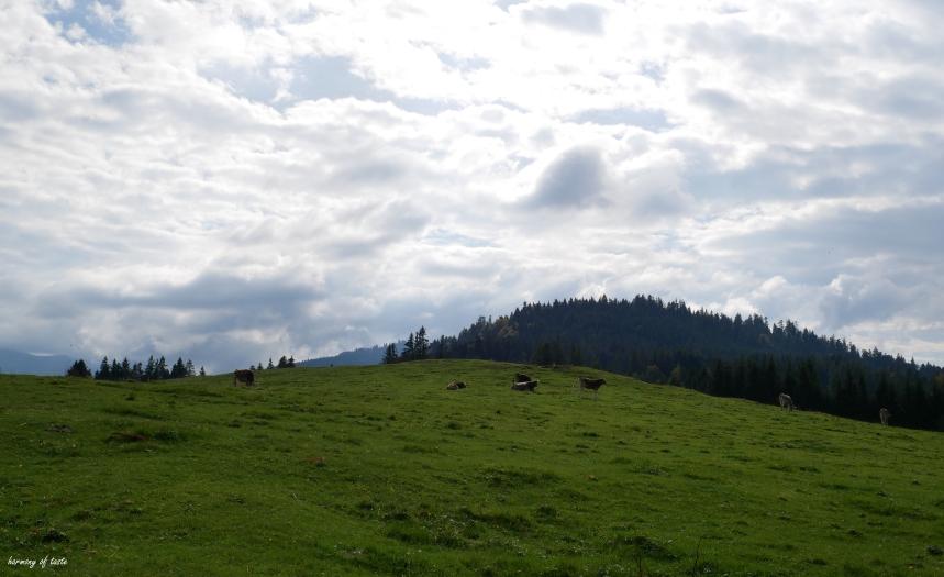 Bödele, Austria 10