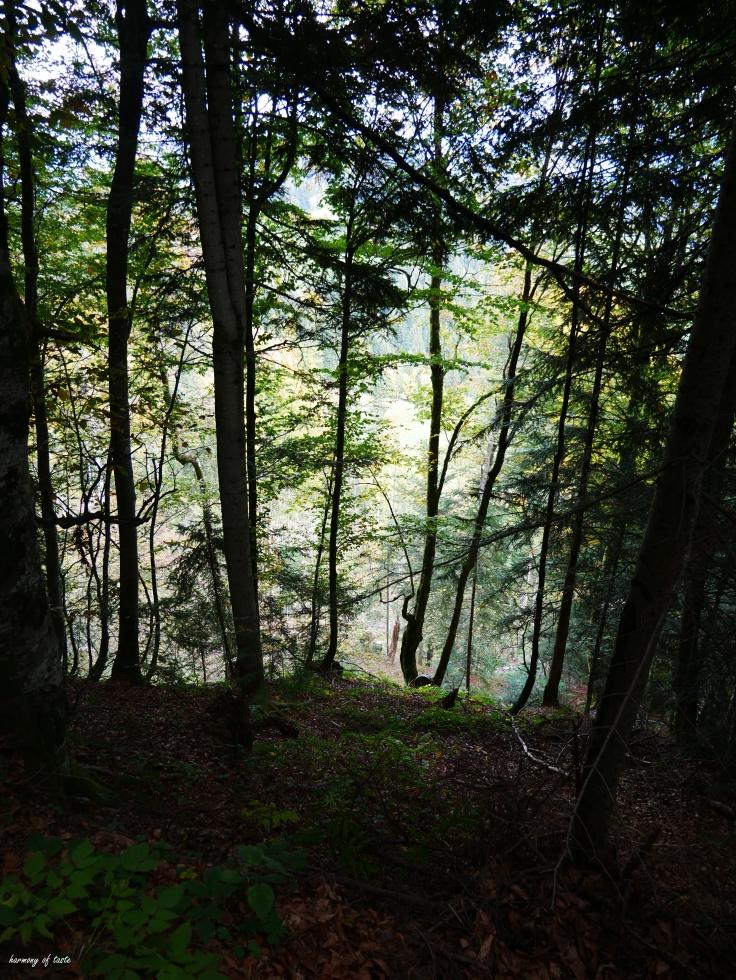 Bödele, Austria 2