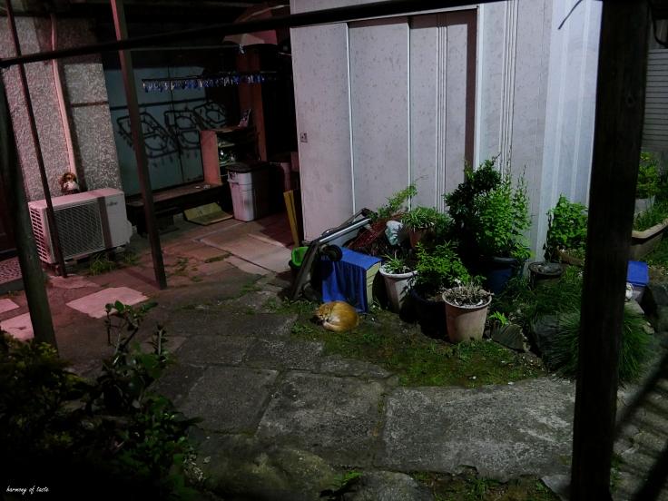 night walk, Tokyo.JPG 1.JPG