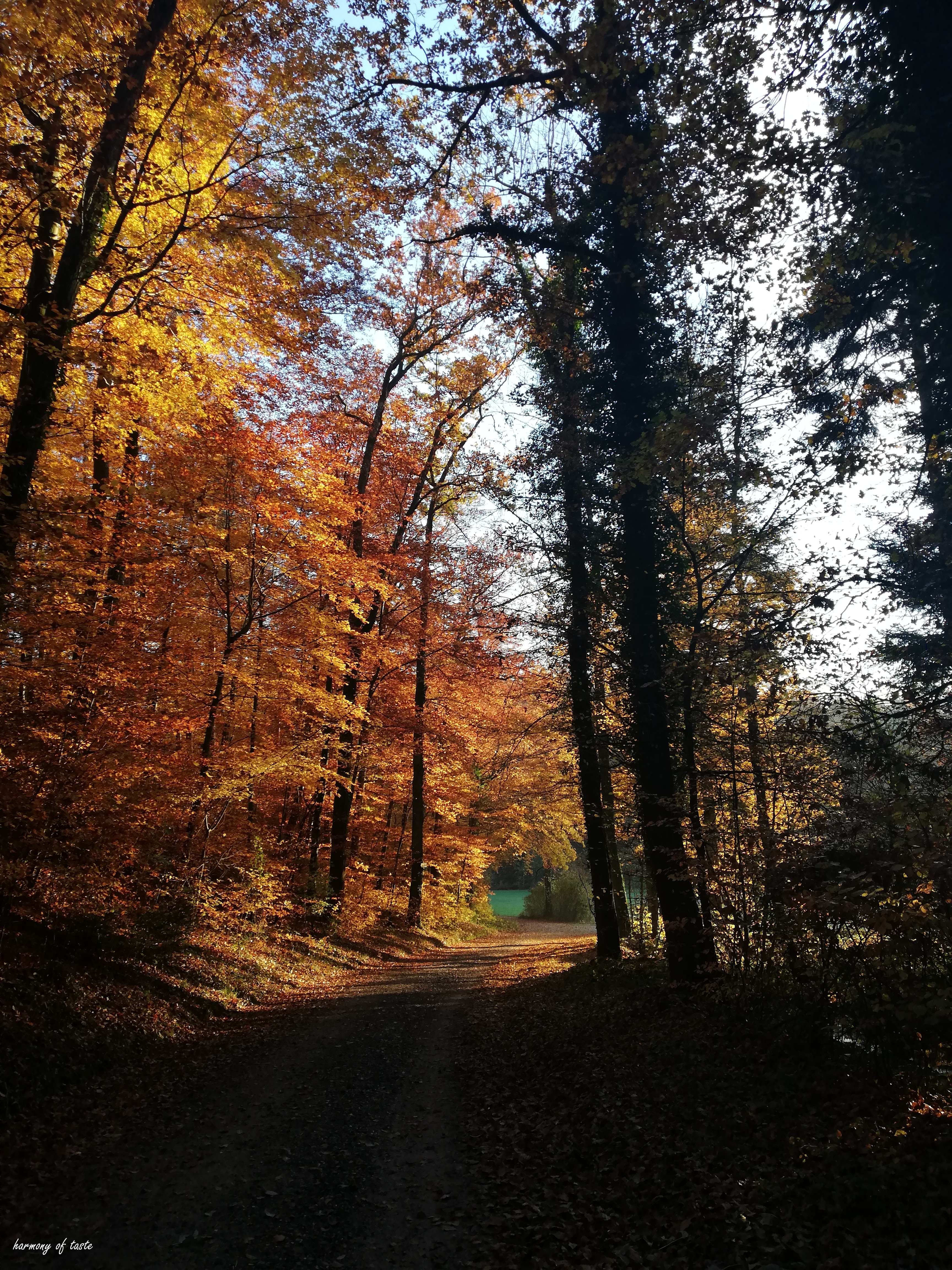 walk in forest 1.jpg