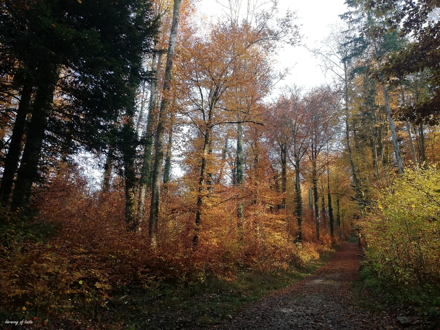walk in forest 2.jpg