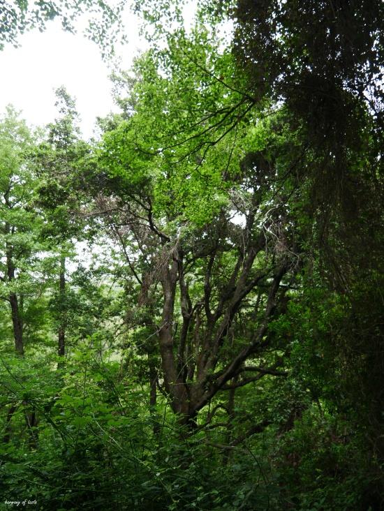 Sardinia forest