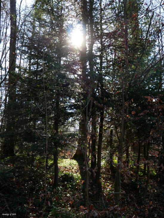 forestbath