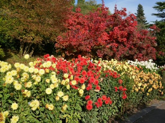 Mainau October light with flowers