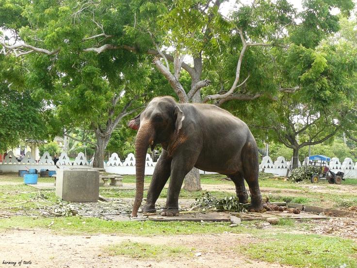 Sri Lanka, Tample Elephant